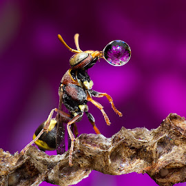 Wasp Blowing Droplet Never End 150112A by Carrot Lim - Animals Insects & Spiders