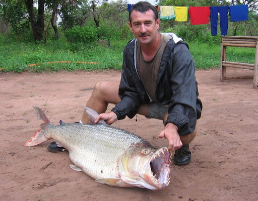 goliath tiger fish. fish