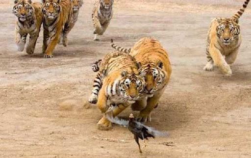 fotos chistosas de animales. imagenes graciosas de animales