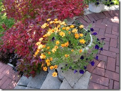 pot-patio-fall