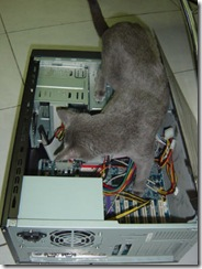 MiMiComputer