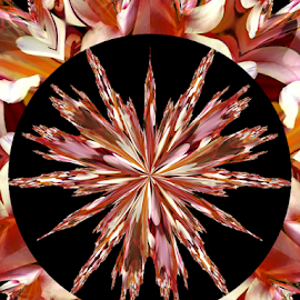 LK 2 by Tina Dare - Digital Art Abstract ( abstract, patterns, designs, distorted, star, burst, shapes )