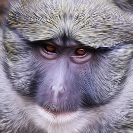 Monkey - Digital Oil by Steven Aicinena - Digital Art Animals (  )