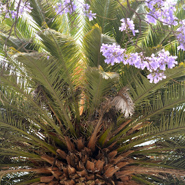 Beautiful Palm by Leslie-Ann Boisselle - Novices Only Flowers & Plants ( palm, purple, green, flowers, tropics )