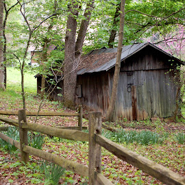 The Old Shed by Philip Molyneux - Buildings & Architecture Other Exteriors ( shed, old, building, wood, architecture, homestead )