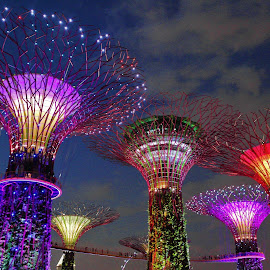 Colourful Super Trees by Koh Chip Whye - City,  Street & Park  City Parks ( night,  )