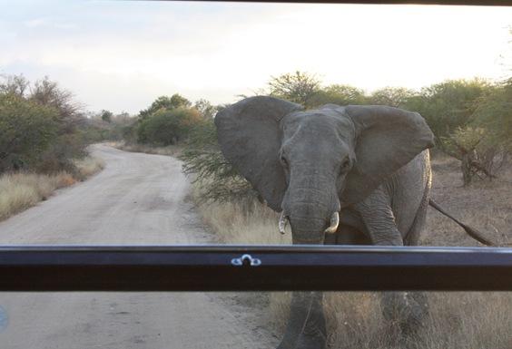 South Africa. Johanesburg, Kruger park, pretoria 421