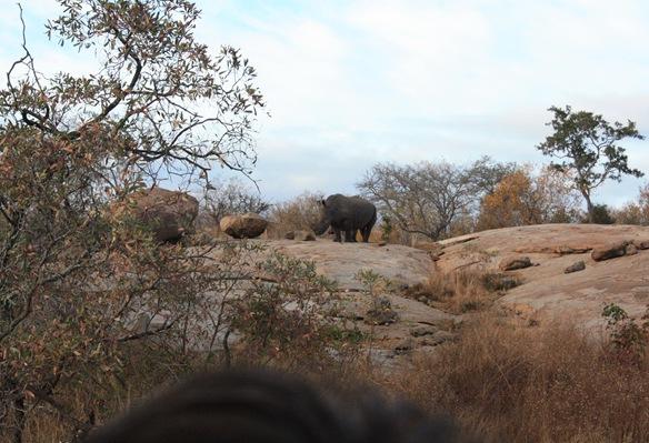 South Africa. Johanesburg, Kruger park, pretoria 451