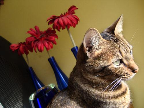 Hilda, a gata