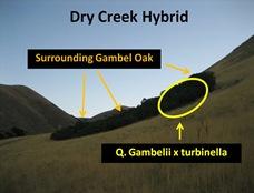 DCreek Hybrid Overview