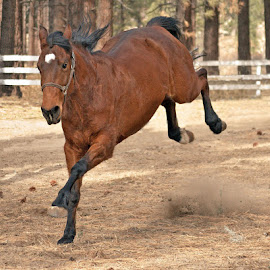 Whoa Nellie! by Michelle Hunt - Animals Horses