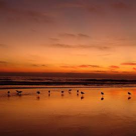 the birds by Elwood Siagian - Landscapes Sunsets & Sunrises (  )