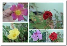 Fotos Outubro 081