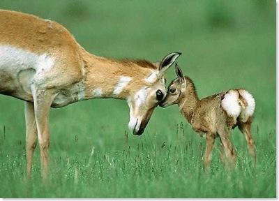 BambiAndMother001