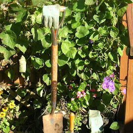My Favorite Old Shovel! by Linda McCormick - Artistic Objects Other Objects ( garden gloves, shovel, my yard, dirt, flowers )