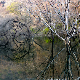 Haunted by Amit Aggarwal - Nature Up Close Trees & Bushes ( sariska, reflection, national park, waterscape, tiger reserve, trees, haunted )