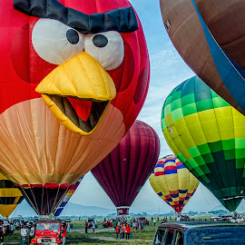 Angry Bird by Farley Avellaneda - News & Events Sports ( trasportation, balloons )