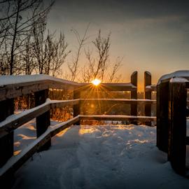 City Park Viewing Deck by Joseph Law - City,  Street & Park  City Parks ( snow winter, cold, trees, sunshine, edmonton, view, deck, city park, evening, glenview )