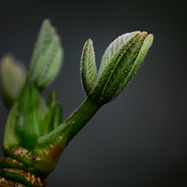 hands by Mike S Candleghost - Nature Up Close Trees & Bushes ( plant, macro, mike s, stem, nikon, close up, garden )