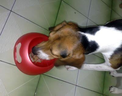 [DOG]紅豆也要吃烤肉!