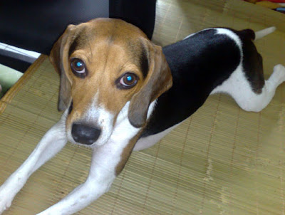 [DOG]紅豆的大老闆坐姿!