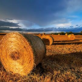 harvest by Gianluca Pisano - Landscapes Prairies, Meadows & Fields ( bales of hay, harvest )