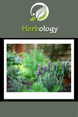 Herbology On The Go