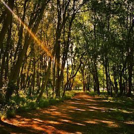 A walk in the park by Melinda Szente - Instagram & Mobile iPhone ( wander, wien, prater hauptallee, vienna, fresh, sunny, path, sunshine, branches, warmcolours, igersvienna, igerswien, instatravel, igers, park, afternoon, green, instavienna, walkinthepark, praterhauptallee, instawien, sunlight, shadows, iphoneography, summer, trees, brown, austria,  )