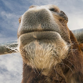 Horsey close up by Stephen Crawford - Animals Horses ( clouds, fence, pony, horses, sunny, wide angle, ponies,  )