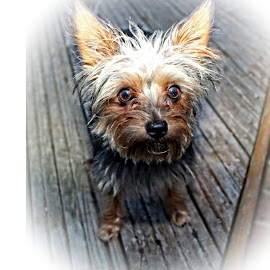 Buckley. My cute boy! by Paul Jenking - Novices Only Pets