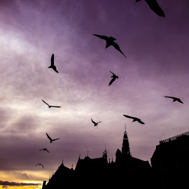 by Christopher Pearce - City,  Street & Park  Skylines ( sky, sunset, amsterdam, birds )