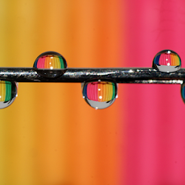 Rainbow drops............. by Aroon  Kalandy - Abstract Water Drops & Splashes