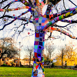 The Remembering Tree, Stratford-upon-Avon by Zoot The-Tog - City,  Street & Park  City Parks ( colour, stratford upon avon, tree, remembrance, vibrant, patch )