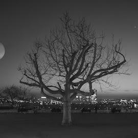 by Milos Vasic - City,  Street & Park  City Parks ( moon, tree, belgrade, night,  )