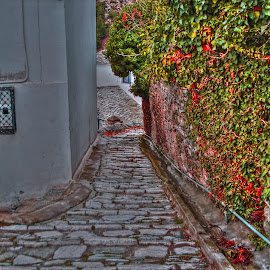 Makrinitsa by Stratos Lales - City,  Street & Park  Neighborhoods ( red, green, neighborhood, path, stone )