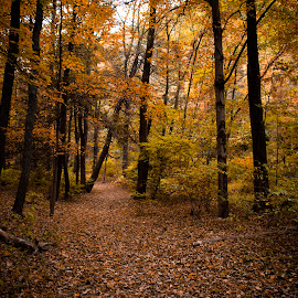 Through the Trees by Isaac Golding - Landscapes Forests ( orange, danville, fall, trees, brown, pennsylvania, yellow, leaves, color, colorful, nature )