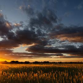 Campo de oro by Eduardo Menendez Mejia - Landscapes Prairies, Meadows & Fields ( field, tokina 12-24, campo, menendez, eduardo, nikon, d5100, prairie )