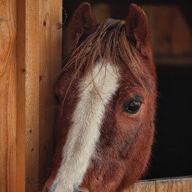 Hatch 271014 by Dean Thorpe - Animals Horses