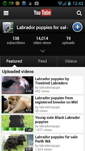 Truebred Labradors puppies - screenshot