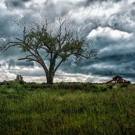 Fast Storm Moving by Gini Farnham - Landscapes Weather ( countryside, barns, landscape, storm, dead tree,  )