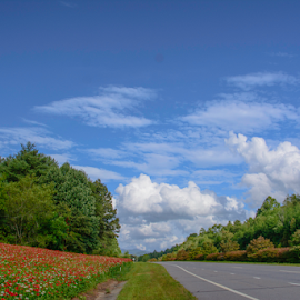 Along a Mountain Road by Judy Hall-Folde - Landscapes Mountains & Hills ( clouds, highway, franklin, fluffy cloud, road, landscape, mountain road, north carolina, mountain highway, distance, sky, trees, flowers )