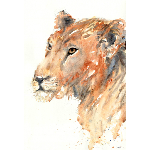 Lion painting art watercolour Africa