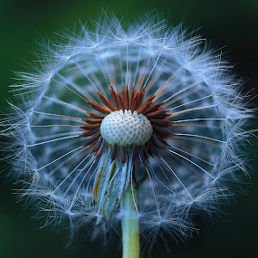 by Carsim Novianto - Nature Up Close Other plants