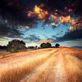 Roads part 15 by Michal Mierzejewski - Landscapes Prairies, Meadows & Fields ( clouds, field, wild, red, dawn, tree, mierzejewski, werol, road, sunrise, morning, michal,  )