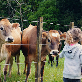 Cows and Kids by Michelle du Plooy - Novices Only Portraits & People ( fence, nature, heifers, outdoors, landscape, toddler, cows )