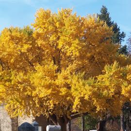 Yellow Tree Leaves by Tammy Jones Perdue - City,  Street & Park  Cemeteries ( tree, autumn, cemetery, yellow )