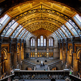 The Museum of Natural History by Matthew Haines - Buildings & Architecture Public & Historical ( london, museum )