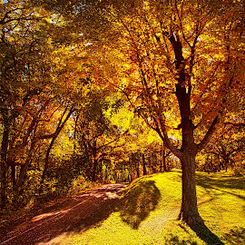 Fall Colors by Phil Koch - Landscapes Forests ( vertical, photograph, fine art, travel, yellow, leaves, love, sky, nature, autumn, flowers, light, flower, orange, agriculture, horizon, portrait, dawn, serene, outdoors, trees, floral, natural light, wisconsin, ray, landscape, phil koch, sun, photography, blue sky, path, horizons, clouds, office, park, green, back light, scenic, morning, shadows, field, red, color, sunset, peace, fall, meadow, landscapephotography, beam, sunrise, landscapes, hike, mist )
