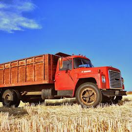 Harvest Truck by Nick Crawford - Transportation Automobiles ( old, dump, grill, truck, bales, farm, sky, rust, classic, wheat, ranch, grass, image, alfalfa, semi, photo, field, red, season, blue, fall, hay, summer, harvest, cut, big, antique )