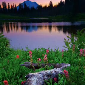 Mirror Lake by Dustin Penman - Landscapes Prairies, Meadows & Fields ( national park, sunset, mt. rainier, lake, mirror lake, penman, pacific northwest )